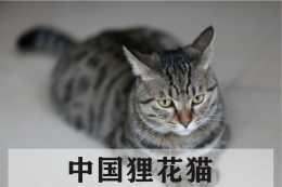 解讀貓咪行為與貓咪思維,收藏起來有空對照!