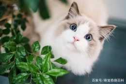 自帶體香的貓咪,靠什麼來保持乾淨