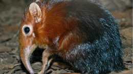 盤點自然界中的那些有毒的哺乳動物!