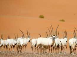 科學家們幫助動物迴歸大自然