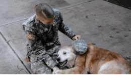 小主人去外地軍訓兩個月,跟陪伴多年的狗狗道別,畫面讓人落淚!