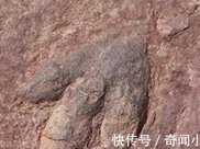 距今1.65億年,巨大恐龍足跡現英國海灘